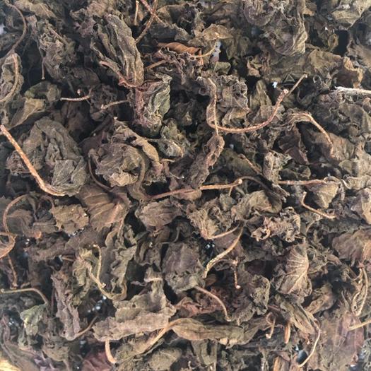 广东省肇庆市怀集县 大量出售紫苏叶,梗,干货   药材检已达标。