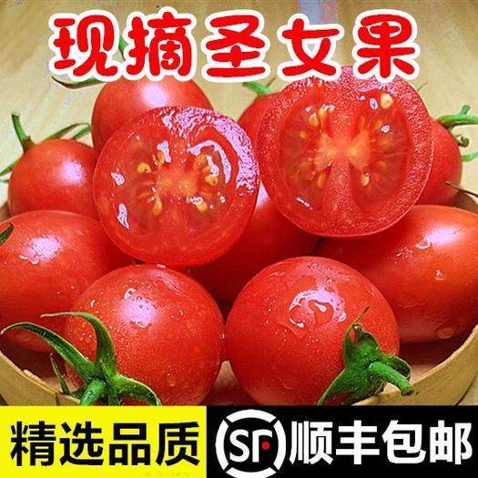 富民縣大紅西紅柿 【特價包郵】圣女果新鮮 云南農家新鮮櫻桃小番茄 批發包郵