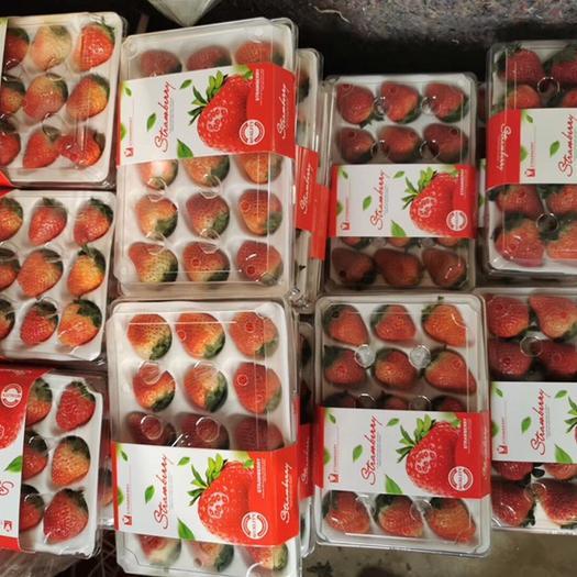 徐州 精品有機草莓