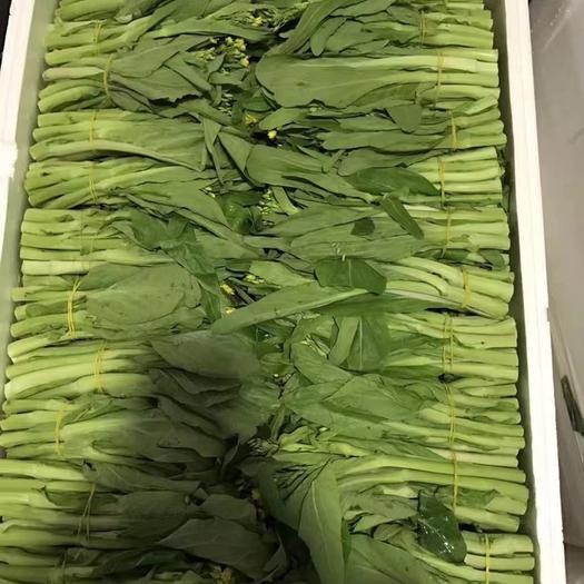 四川省德阳市广汉市 高品质白菜苔出售,品质好