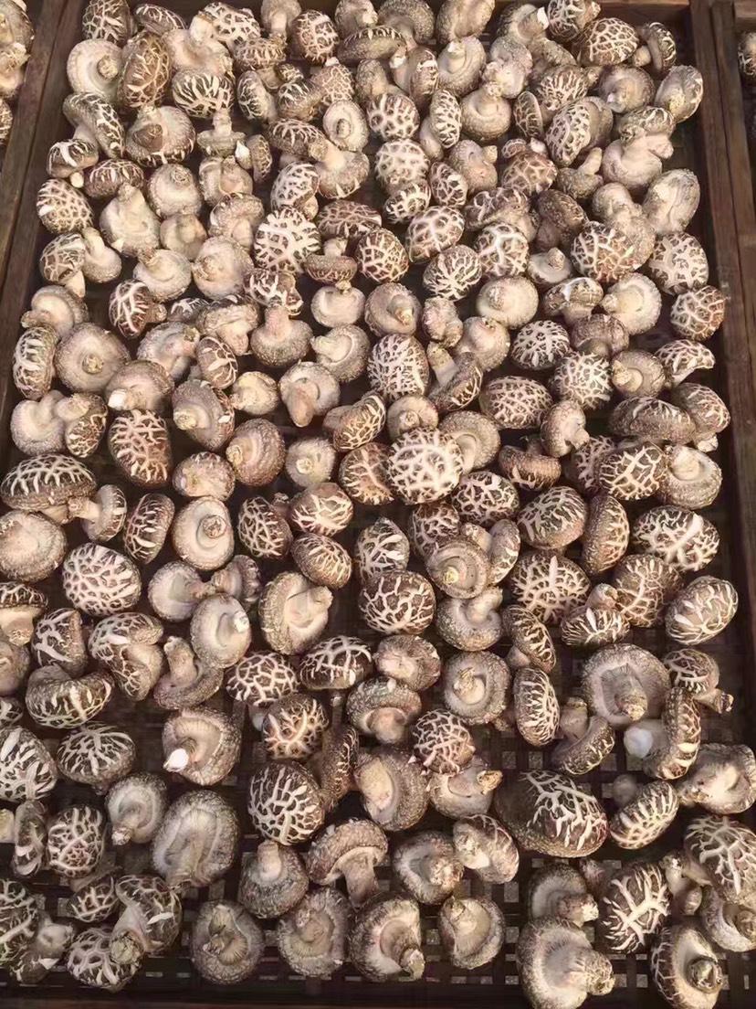 花菇 干香菇 2.5cm~4cm