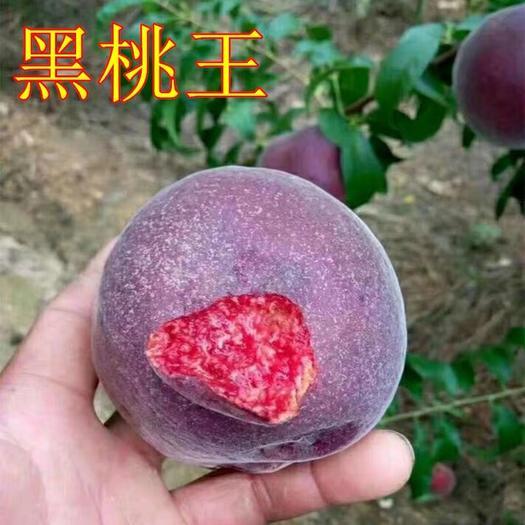 临沂平邑县 中华黑桃王桃树苗 优质嫁接桃树苗 基地直销 现挖现卖 包品种