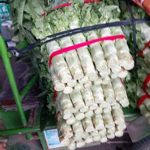 金华金东区 莴笋,红叶。不空心,每颗1.5斤以上。新鲜,当天砍。新货