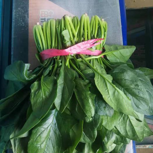 山东省聊城市东昌府区 精品菠菜,大棚种植,10万亩在等待客商