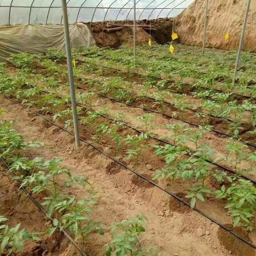 山东省菏泽市牡丹区贴片式滴灌带 16贴片滴灌带