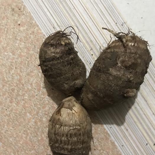 广东省佛山市南海区毛芋头 3cm以上