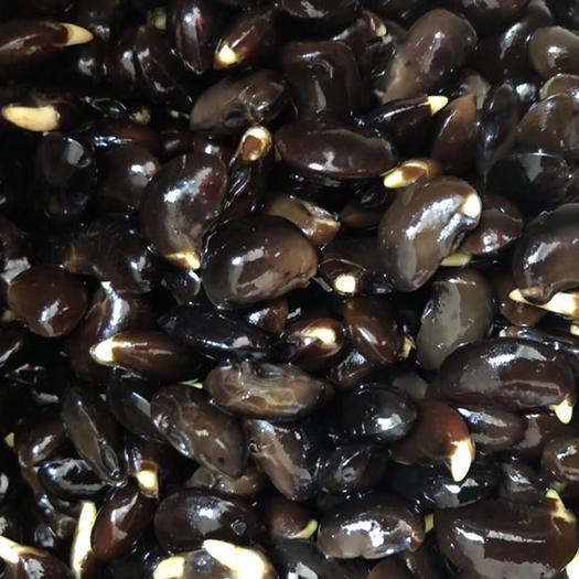 泰安泰山区 国槐种子,槐树种子,自己加工,保证出芽率
