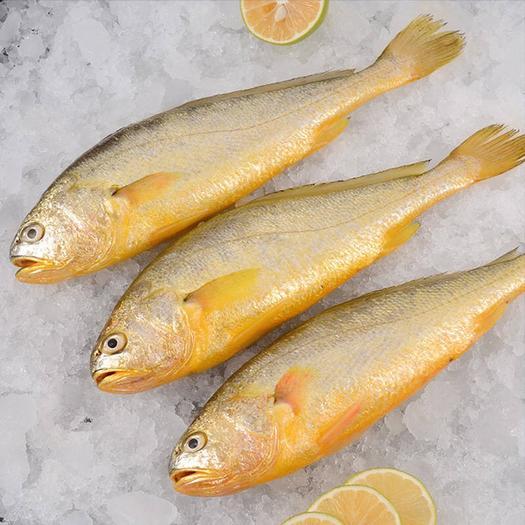 日照東港區 【順豐包郵】黃花魚冷凍黃花魚大黃魚小黃魚新鮮海鮮批發包郵