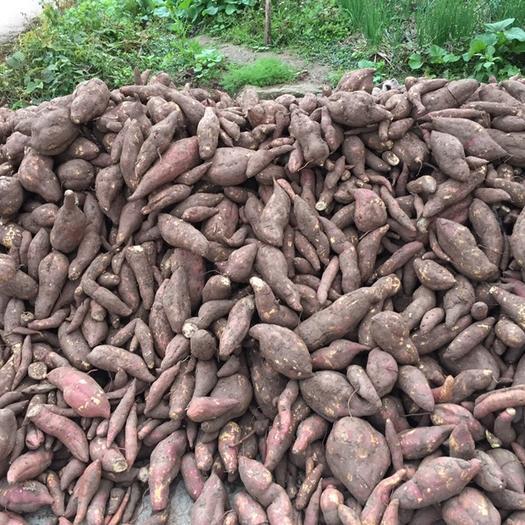 四川省内江市威远县白心红薯 红皮 混装通货