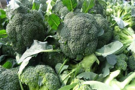 台州三门县 万亩有机蔬菜 西兰花