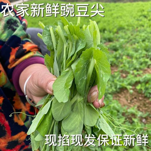 金堂县 四川 豌豆尖 豌豆苗 豆苗 电商代发 产地成都金堂县 代收
