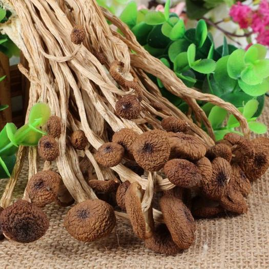宁德蕉城区 古田茶树菇 干货不开伞茶树菇盖嫩柄脆 南北干货批发