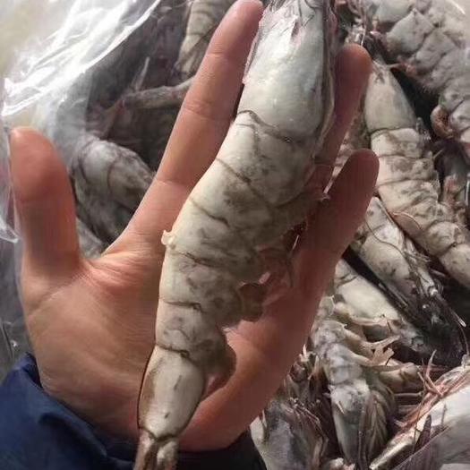 乳山市中国对虾 海捕大虾16-20个头和20-30头产地直发