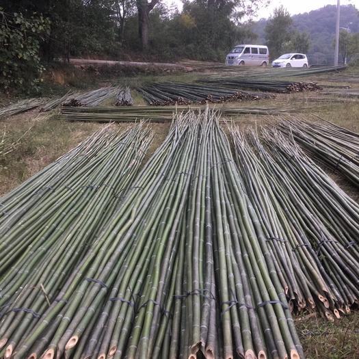 永州零陵区 大量供应各类小竹子、菜架竹、药架竹、大棚竹等