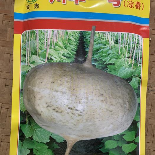赣州章贡区凉薯种子 双鑫川早一号凉薯 超早熟川早一号地瓜