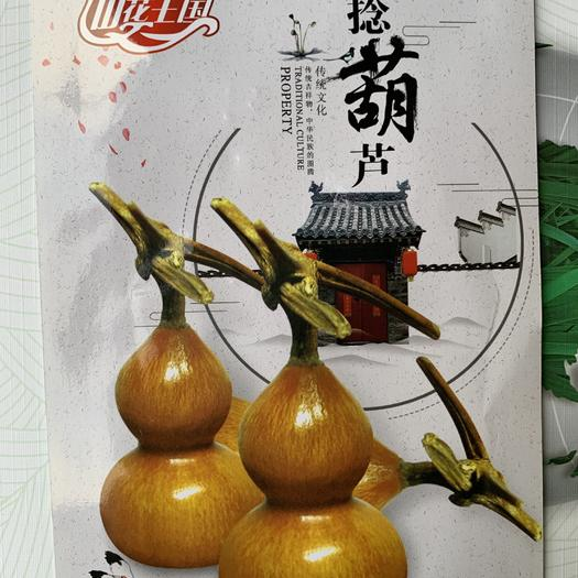 赣州 观赏性葫芦种子