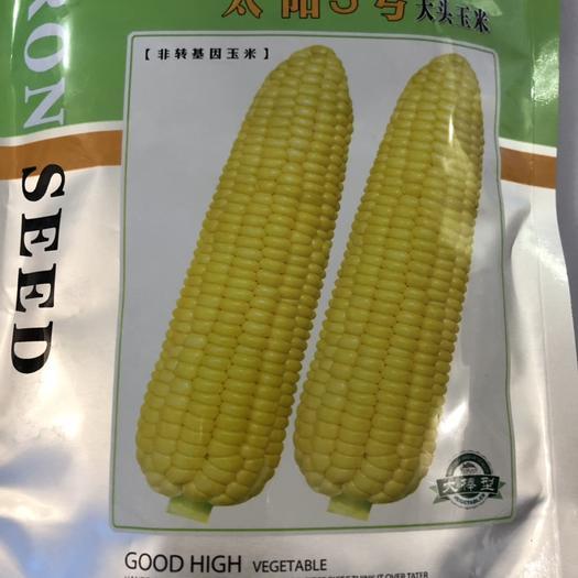 梅州平遠縣 進口泰系超甜玉米 太陽3號玉米種子 極高產 口感好