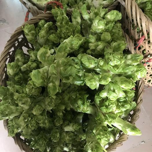 绵阳三台县四川儿菜 2.0斤以上