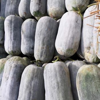 广西地区冬瓜20斤起步,平均三十五左右,好质量