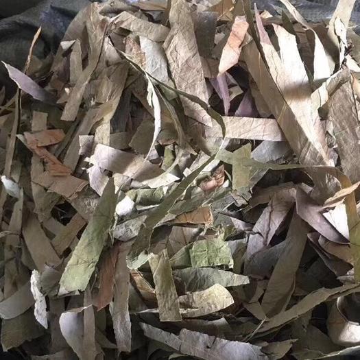 玉林 荷葉絲  全干無硫顏色青綠