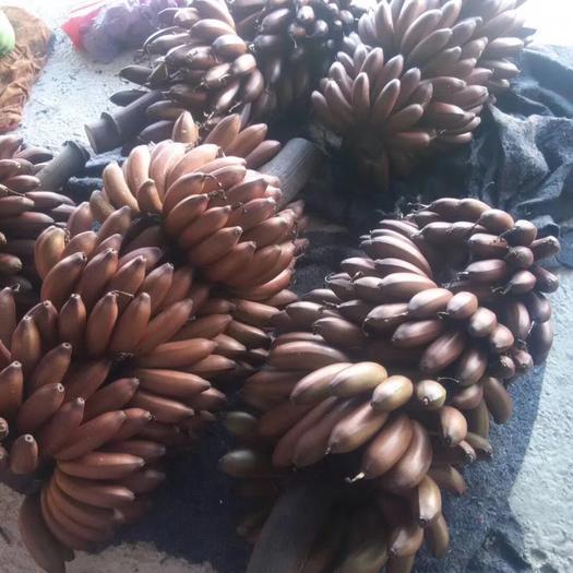 漳浦县 漳州土楼红美人红皮香蕉当季新鲜水果现摘现发一件包邮代发!