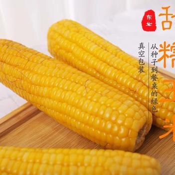 甜糯玉米 【10根】甜糯黄糯玉米真空东北粘苞米棒黏鲜香非转基因粗粮