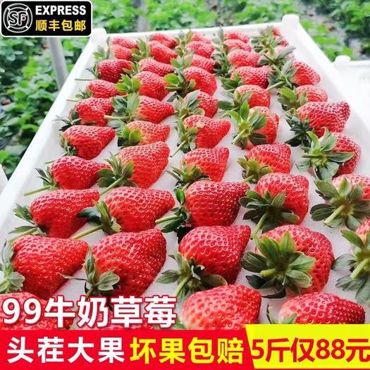 廣州 【現貨】丹東99草莓牛奶草莓5水果新鮮3斤牛奶草莓非丹東