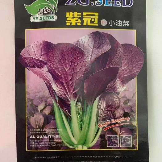 宿迁沭阳县紫油菜种子 小油菜种子紫秀 紫冠