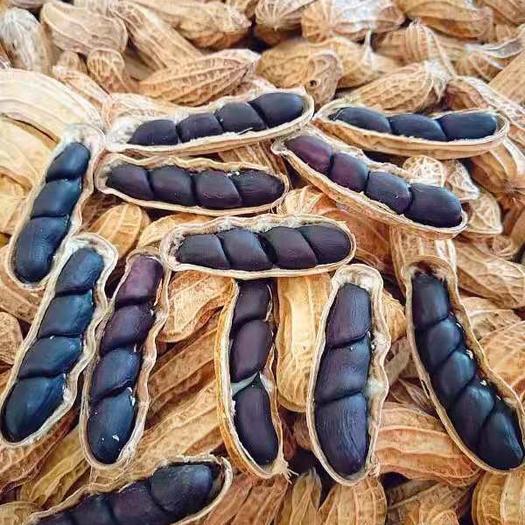 孟連傣族拉祜族佤族自治縣黑花生 孟連本地貨、飽滿度可達93%。