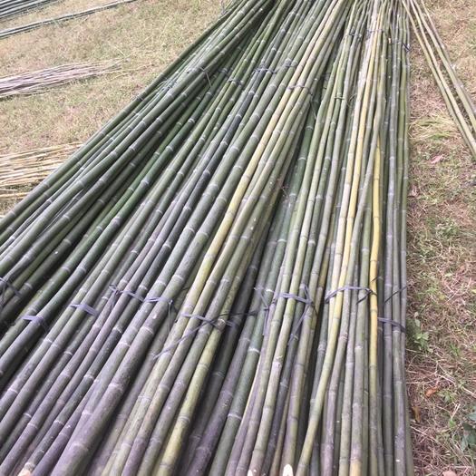 永州 竹子,麻竹、斑竹、水竹大量供应菜架竹!