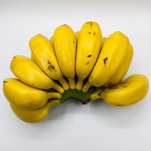 兴业县 产地直供广西小米蕉5斤,9斤泡沫箱包装