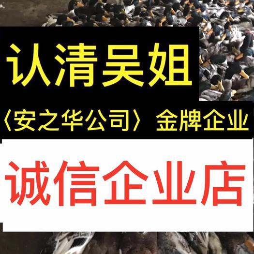 南宁西乡塘区杂交鸭苗 …是间20年诚信、无假货企业店