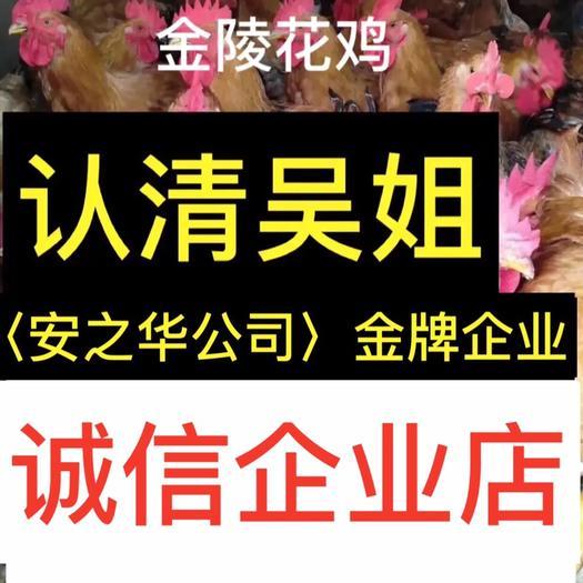 南宁西乡塘区金陵麻鸡苗 …是间20年诚信、无假货企业店
