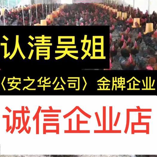 南宁青脚土鸡苗 …是间20年诚信、无假货企业店