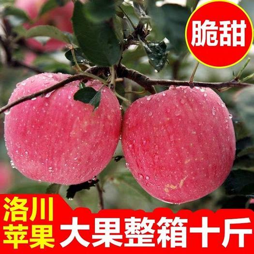 洛川縣 【湖北可發】陜西正宗洛川紅富士蘋果脆甜不打蠟水果一件代發