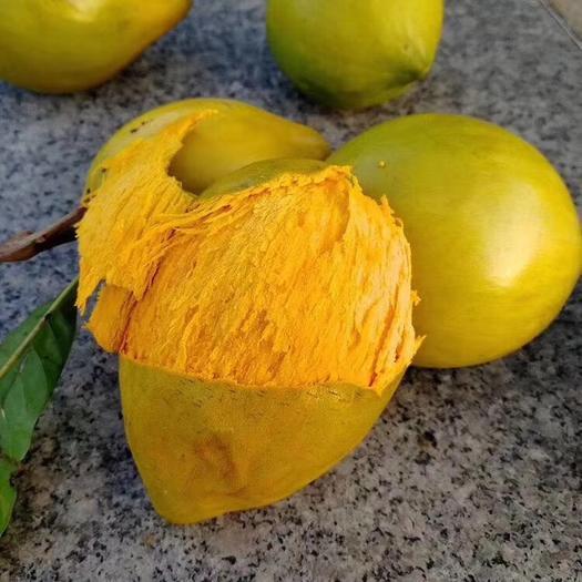钦州灵山县树蛋果苗 图片带果发