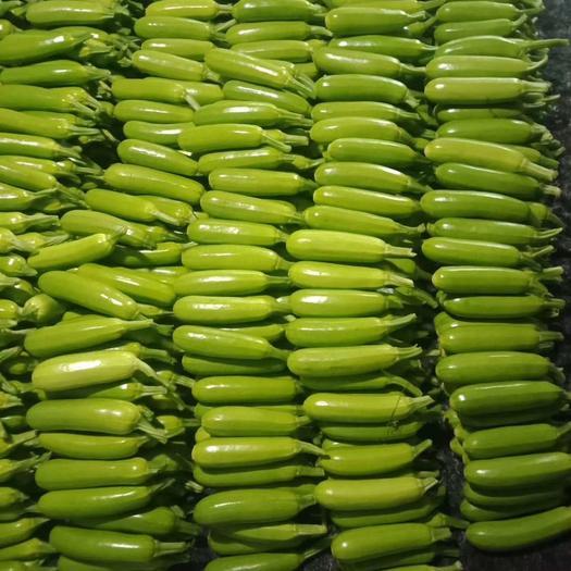 淄博臨淄區 綠皮西葫蘆產地直供專業合作社代辦大量上市中?。。。?!