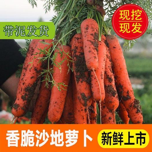 西安灞桥区 10斤胡萝卜 现货 全国包邮 沙地胡萝卜 1件代发 可批发