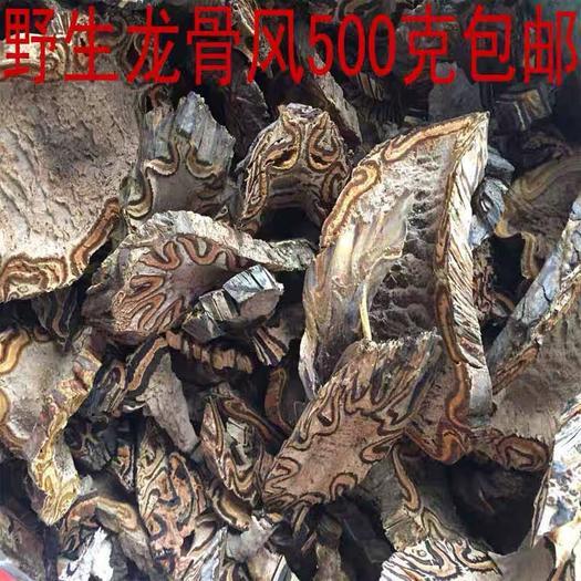玉林玉州區 飛天擒羅 中藥材龍骨風 山卡嶗 撈勞禽 桫欏