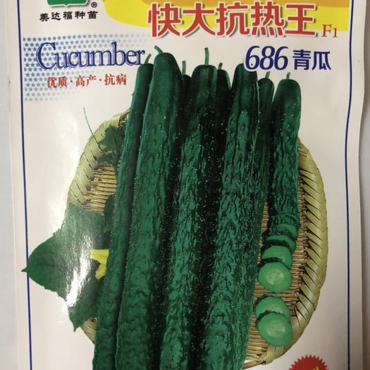 平远县油亮密刺黄瓜种子 杂交一代快大抗热王青瓜种子