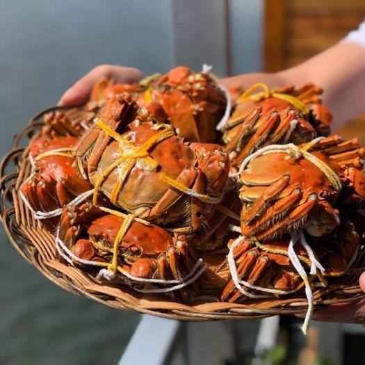 泗洪县 洪泽湖大闸蟹,精品大闸蟹,生态大闸蟹,1.5母蟹,产地直发