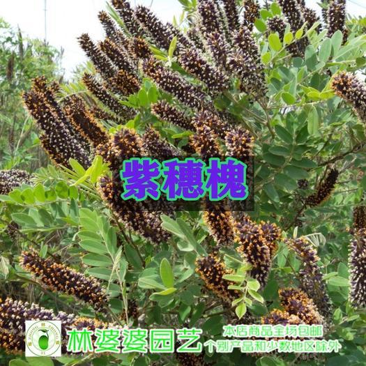 宿迁沭阳县护坡草种子 各种灌木护坡种子新种子包邮