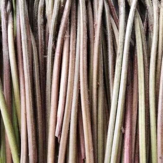 重慶石柱 蕨菜,龍爪菜