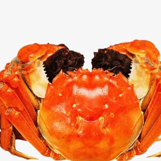 杭州 阳澄湖大闸蟹无污染,个头匀称,肉肥大,蟹黄足。送礼的首选。