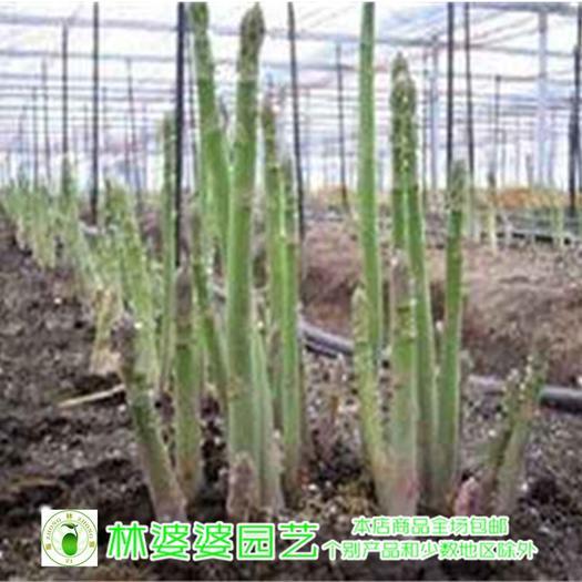 沭阳县 进口芦笋种子包邮