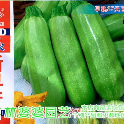 沭阳县 各种西葫芦种子全场包邮