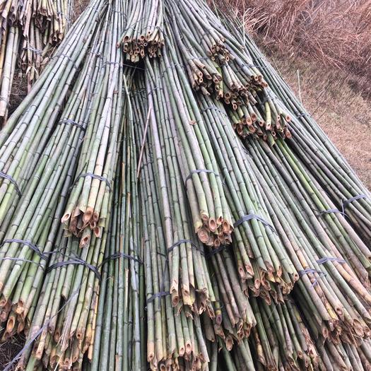 永州双牌县莱架竹 菜架竹、排山竹、大棚竹等2.2–9米,规格齐全、欢迎选够!