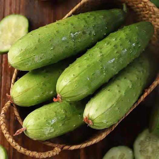 盘锦双台子区 农家自种水果小黄瓜 5斤现摘新鲜黄瓜 孕妇蔬菜