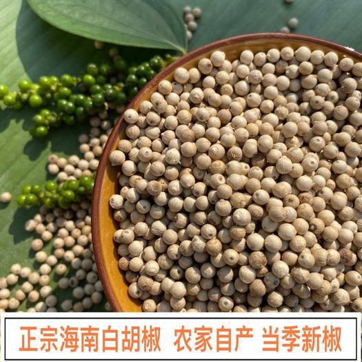 文昌市 海南農家白胡椒無硫足干原產地發貨可代磨粉