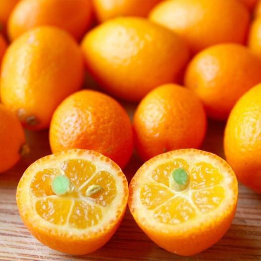 桂林临桂区 新鲜水果广西桂林脆皮金桔5斤装现摘现发孕妇时令水果包邮